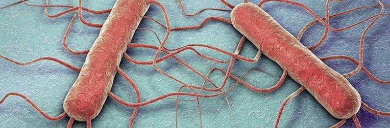 Close up van de listeria bacterie